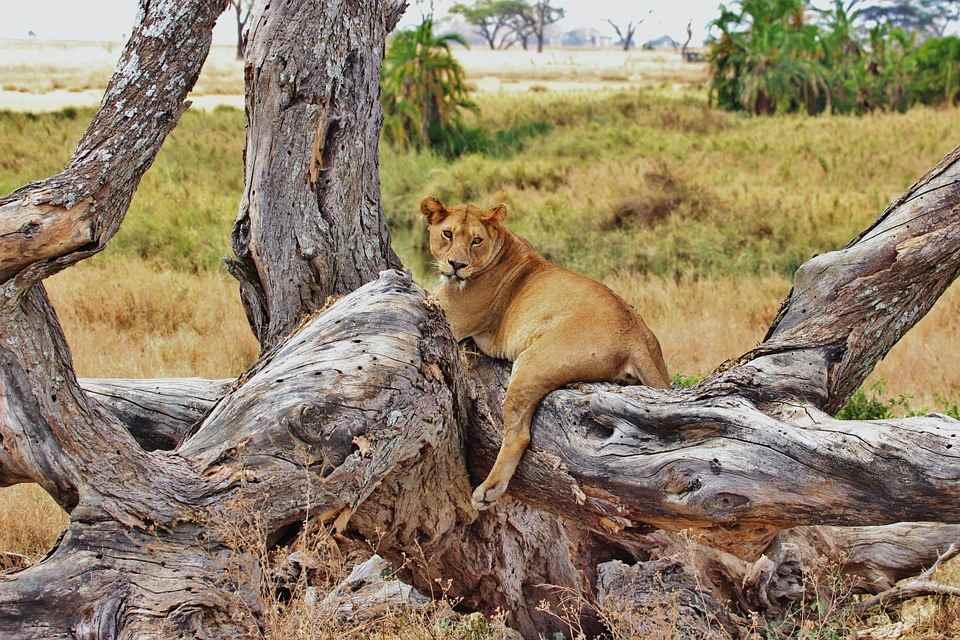 Serengeti Park4