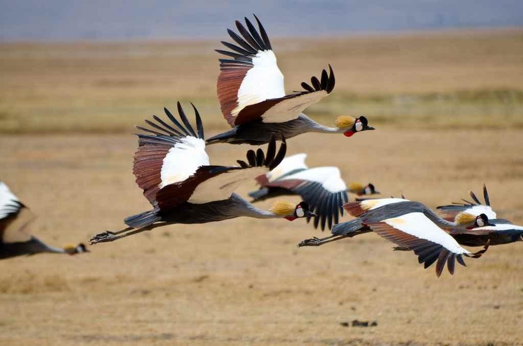 Ngorongoro National Park 2