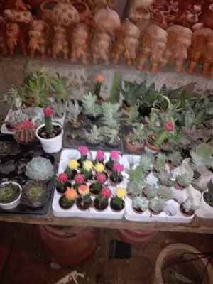 Vijay Nursery