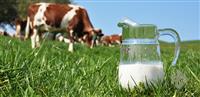 Balu Dairy