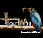 Tour Wild