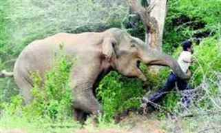 Odisha: Five persons trampled to death by an elephant in Angul district