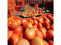 Govt reviews price and availability of tomatoes